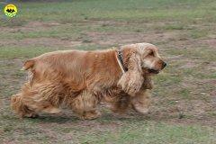023-il-cane-impara-giocando-stage