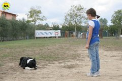 024-il-cane-impara-giocando-stage
