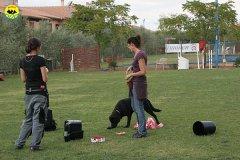 026-il-cane-impara-giocando-stage
