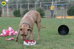 028-il-cane-impara-giocando-stage