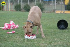 029-il-cane-impara-giocando-stage