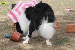 037-il-cane-impara-giocando-stage