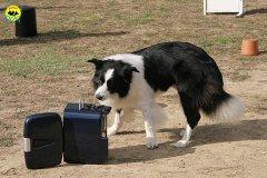 041-il-cane-impara-giocando-stage