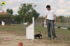 045-il-cane-impara-giocando-stage