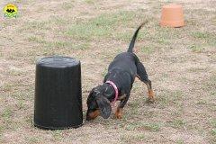 047-il-cane-impara-giocando-stage