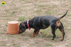 049-il-cane-impara-giocando-stage