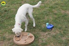 051-il-cane-impara-giocando-stage
