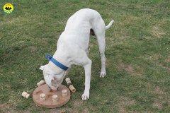 055-il-cane-impara-giocando-stage
