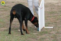 058-il-cane-impara-giocando-stage