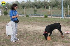 060-il-cane-impara-giocando-stage