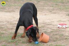 061-il-cane-impara-giocando-stage