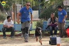 062-il-cane-impara-giocando-stage