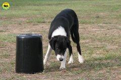 068-il-cane-impara-giocando-stage