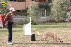 075-il-cane-impara-giocando-stage