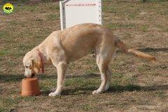 076-il-cane-impara-giocando-stage