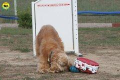 078-il-cane-impara-giocando-stage