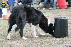 081-il-cane-impara-giocando-stage