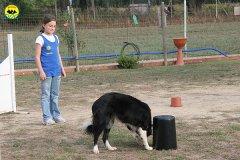 082-il-cane-impara-giocando-stage