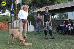 083-il-cane-impara-giocando-stage