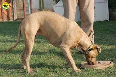 084-il-cane-impara-giocando-stage